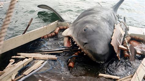 Boat Junk Yard Fresno by Sharks Why We Re Obsessed With This Villain