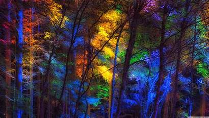 Colorful Forest Trees 4k Background Dual Uhd