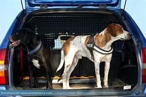 Hundegurt Fürs Auto : autofahren mit hunden ratgeber und tipps von planet hund ~ Kayakingforconservation.com Haus und Dekorationen