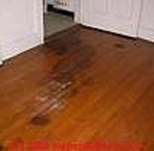 urine wooden floor urine stains on