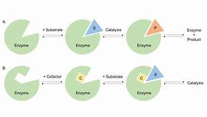 Enzyme Structure And Function  U2013 Creative Enzymes Blog