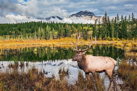 Canada's 10 Most Popular National Parks - WorldAtlas