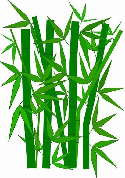 Bamboo Clip Leaves Bambu Clipart Drawing Vector