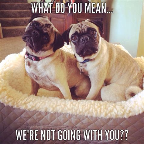 Crying Dog Meme - cute pugs look at my pug cartoons on https www pinterest com goldengalya goldengalya luv