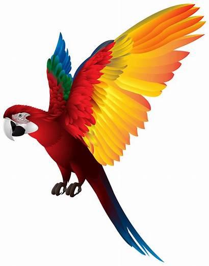 Parrot Clipart Clip Transparent Clipground