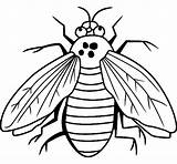 Coloring Pages Fly Bugs Printable Bug Sheet Sheets Animal Flies Insects Printables Guy Getcoloringpages Fruit Letscolorit sketch template