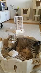 Verkleidung Für Katzen : kuschelbett f r katzen liegemulde k rbchen f r katzen fummelbox f r katzen ~ Frokenaadalensverden.com Haus und Dekorationen