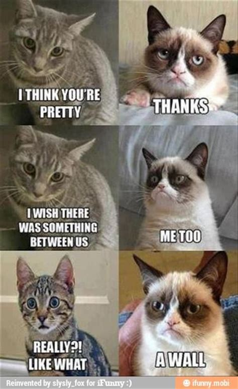 Best Cat Memes - best grumpy cat memes of all time image memes at relatably com