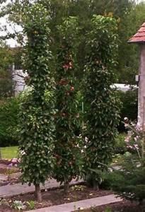 Heidelbeeren Pflanzen Zeitpunkt : spalierobst richtig schneiden richtiger g rten und pflanzen ~ Orissabook.com Haus und Dekorationen