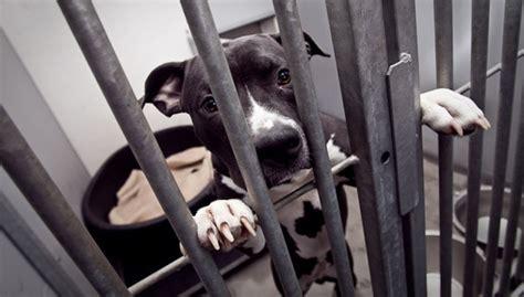 zijn vechthonden agressief experts aan het woord doggonl