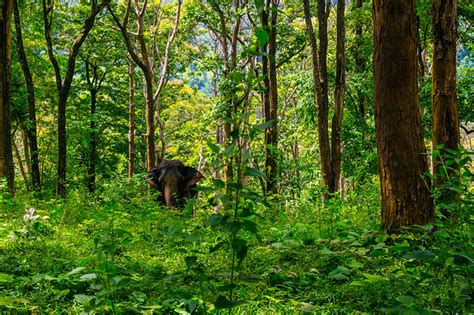 details  ongoing national afforestation schemes  moefcc