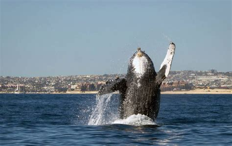 Is this whale actually waving at people? | Metro News