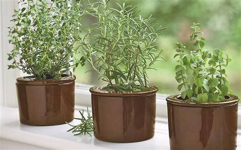 Best Windowsill Plants by Here S Why You Should Attend How To