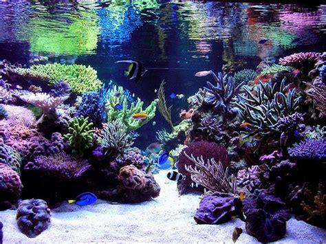 Reef Aquarium Aquascape Designs  Reef Aquascaping Designs