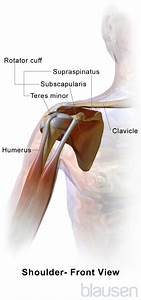 Shoulder Injuries - Injuries And Poisoning