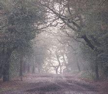Sutton Park National Nature Reserve image Sutton park
