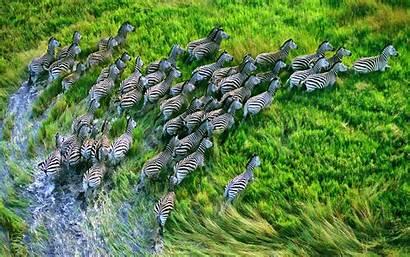 Apple Wallpapers Zebra Macbook Pro Retina Screen
