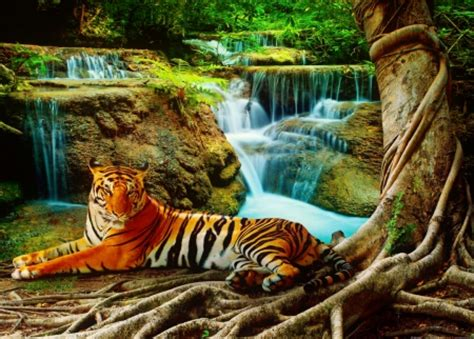 Waterfalls Wallpaper With Animals - resting tiger cats animals background wallpapers on