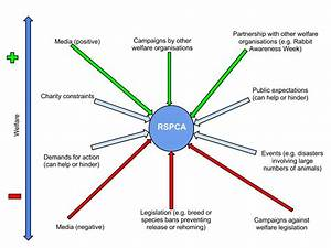 Rspca Cambridge  External Pressures On The Rspca