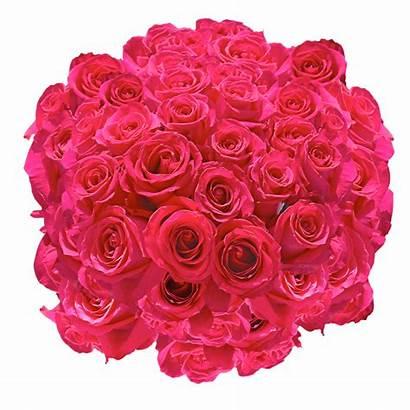 Roses Valentine Flowers Valentines Globalrose Stems Amazing