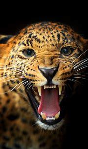 Animal iPhone Backgrounds   PixelsTalk.Net
