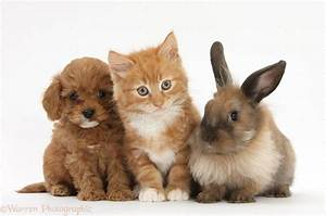 Cool Puppies And Kittens And Bunnies Together And Also ...