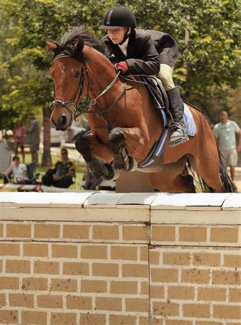 showjumping pony nicola arrange sime please information contact za