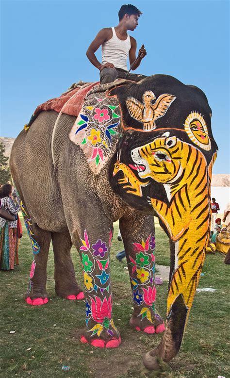 parade  elephants  india   funcage