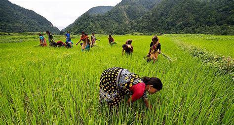 cr馘it agricole si鑒e social helvetas erntezeit naturaplan basmati reis aus indien