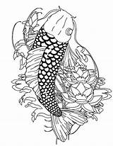 Koi Fish Coloring Pages Paradise Adults Realistic Coy Template Templates Popular Colornimbus sketch template