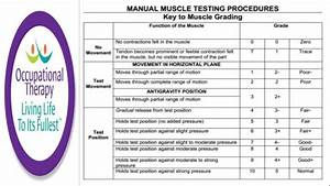 Occupational Therapy Manual Muscle Testing Grades