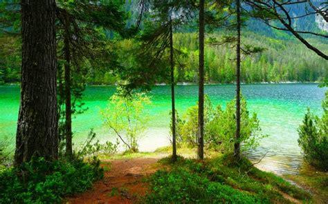 nature landscape summer lake forest mountain shrubs