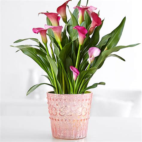 pictures of potted flowers potted flowers flower plants plants delivery