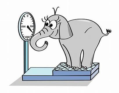 Weight Elephant Weigh Gaining Pounds Pluto Nasa