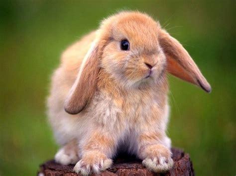 imagenes de tiernos  dulces conejos  liebres