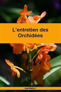 Comment Soigner Une Orchidée : comment soigner une orchid e esprit la ta le blog ~ Farleysfitness.com Idées de Décoration