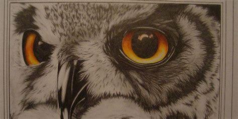 owl eye  splendid pencil drawings   birds
