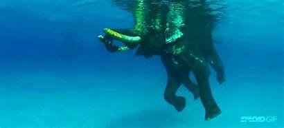 Ocean Elephant Swimming Delight Watching Last Swim