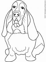 Hound Coloring Pages Beagle Dog Basset Bassett Coon Dogs Drawing Adults Adult Books Printable Colouring Print Lightupyourbrain Res Getcolorings Honden sketch template