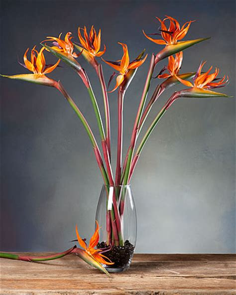 calla lilies for sale silk birds of paradise stems for casual decorating at petals
