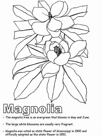 Mississippi Coloring Pages Symbols State Magnolia Printable