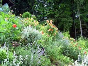 Hang Bepflanzen Bodendecker : bodendecker auf b schung pflanzen seite 2 garten ~ Lizthompson.info Haus und Dekorationen