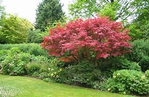 Baum Vorgarten Immergrün : welche b ume eignen sich f r ihren garten der kleine ~ Michelbontemps.com Haus und Dekorationen