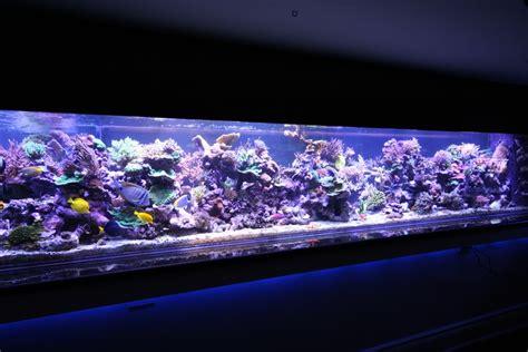 saltwater tank lights coral gallery orphek reef aquarium led orphek