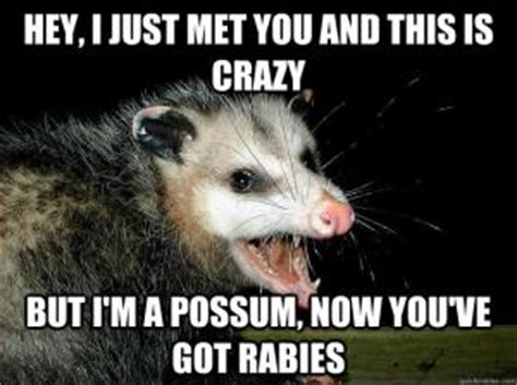 Possum Memes - possum jokes kappit