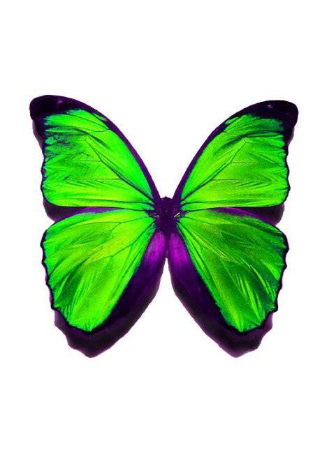 Papillon Vert  Car Only