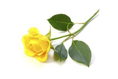 gelbe blumen bedeutung was bedeutet die gelbe