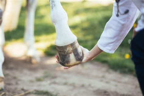 strahlfaeule beim pferd homoeopathisch begleiten expertode