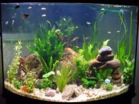 Small Fish Tank Decorations