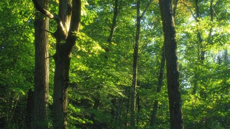 animals    temperate forests referencecom